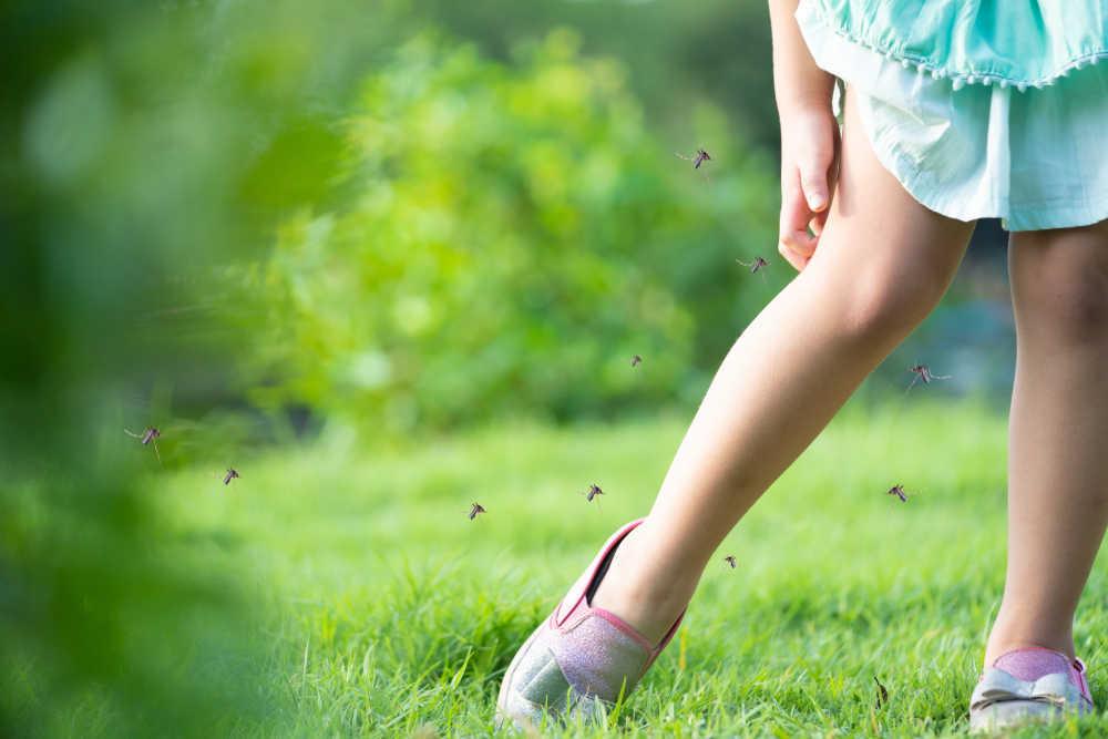 Los mosquitos, transmisores del virus del Nilo