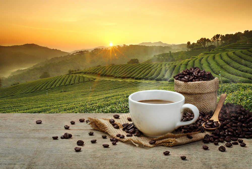 Cualidades que distinguen a un buen café